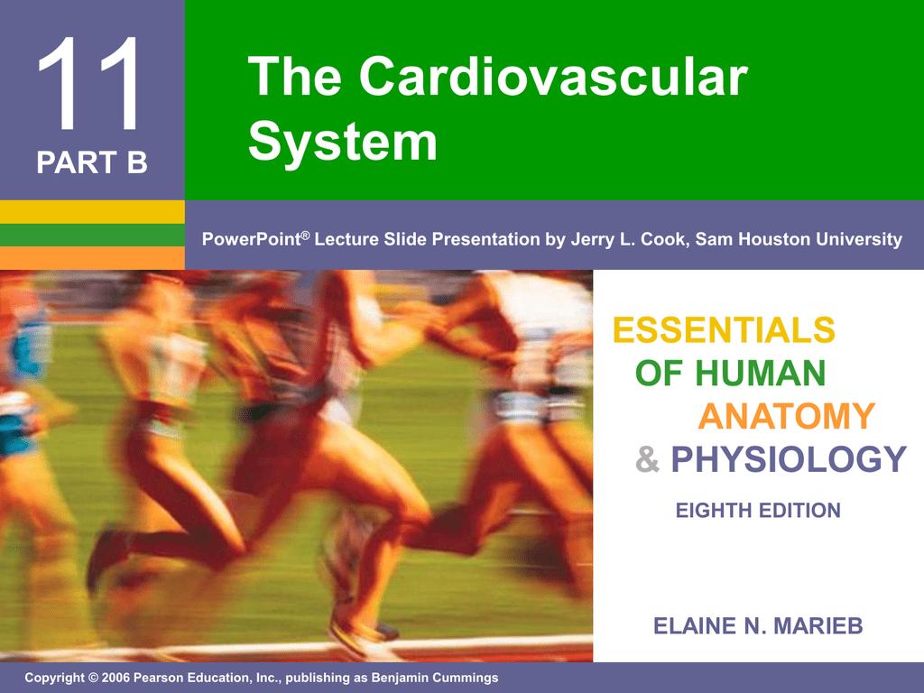 11 The Cardiovascular System ESSENTIALS