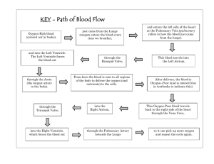 KEY - Path of Blood Flow
