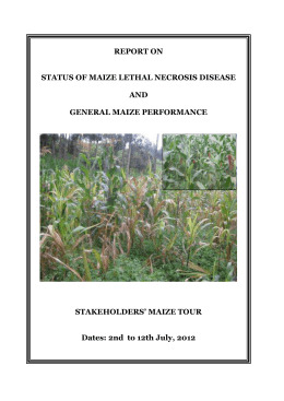 REPORT ON STATUS OF MAIZE LETHAL NECROSIS DISEASE AND