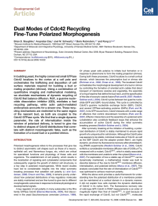 Article Dual Modes of Cdc42 Recycling Fine-Tune Polarized Morphogenesis Developmental Cell
