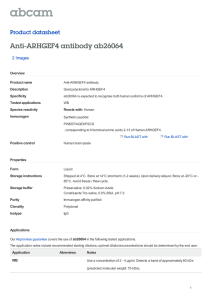 Anti-ARHGEF4 antibody ab26064 Product datasheet 2 Images Overview