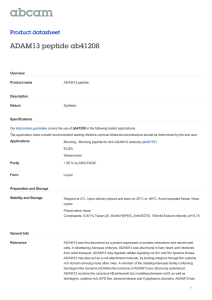 ADAM13 peptide ab41208 Product datasheet Overview Product name