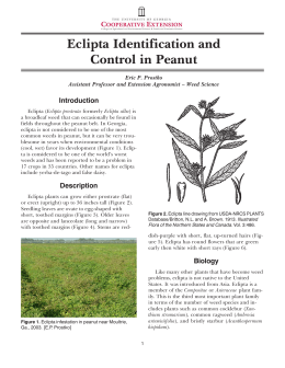 Eclipta Identification and Control in Peanut Introduction Eric P. Prostko