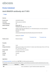 Anti-SNAP29 antibody ab171001 Product datasheet 1 Image