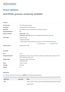 Anti-PPAR gamma antibody ab48583 Product datasheet Overview Product name