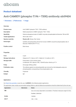 Anti-CAMKIV (phospho T196 + T200) antibody ab59424 Product datasheet 1 Abreviews 1 Image