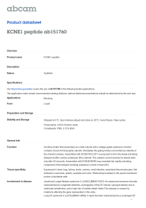 KCNE1 peptide ab151760 Product datasheet Overview Product name