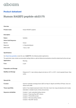 Human RAGEF2 peptide ab23175 Product datasheet Overview Product name