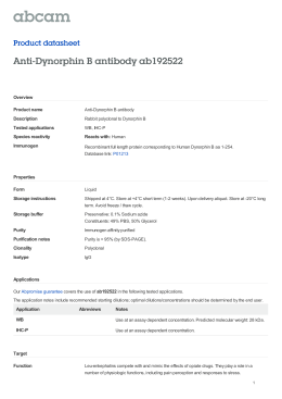 Anti-Dynorphin B antibody ab192522 Product datasheet Overview Product name