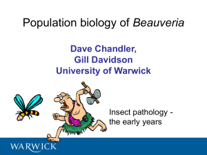 Beauveria Dave Chandler, Gill Davidson University of Warwick