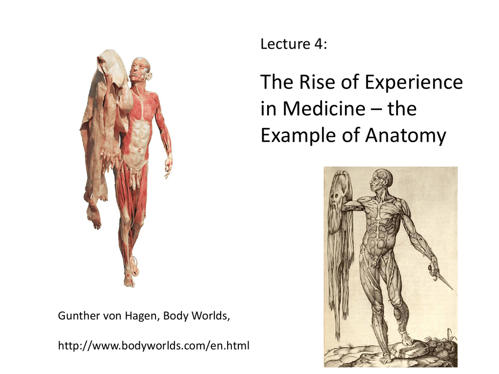 The Rise of Experience in Medicine – the Example of Anatomy Lecture 4: