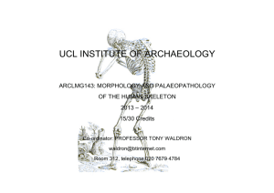 UCL INSTITUTE OF ARCHAEOLOGY ARCLMG143: MORPHOLOGY AND PALAEOPATHOLOGY OF THE HUMAN SKELETON