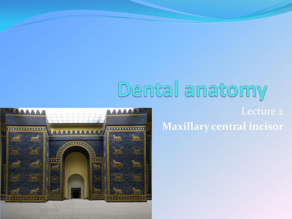 Lecture 2 Maxillary Central Incisor