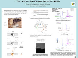The Agouti Signaling Protein (ASIP) University of California at Santa Cruz