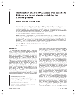 Identification of a 5S rDNA spacer type specific to Triticum urartu