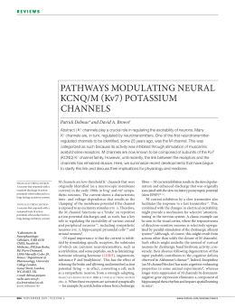 PATHWAYS MODULATING NEURAL KCNQ/M Kv7 POTASSIUM CHANNELS Patrick Delmas* and David A. Brown