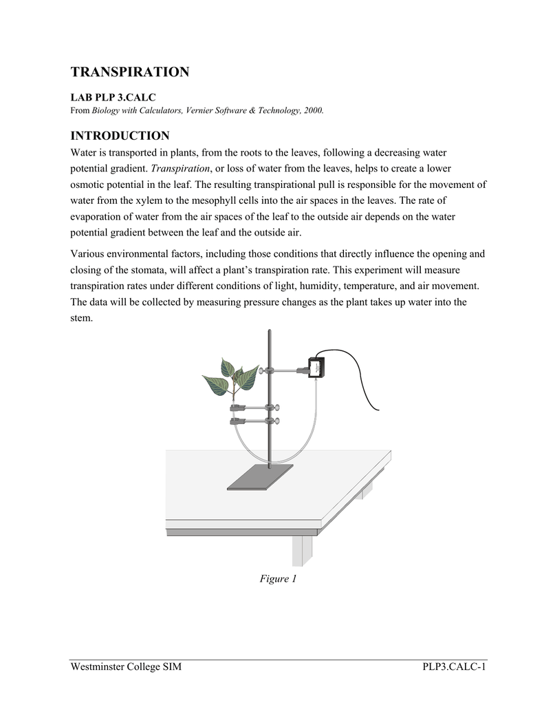 transpiration rates for different plants and conditions