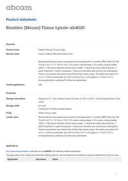 Bladder (Mouse) Tissue Lysate ab4020 Product datasheet Overview Product name