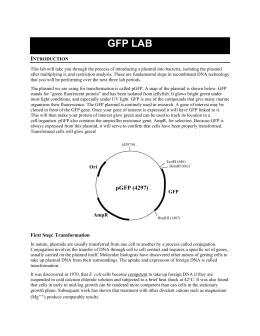 Gfp lab report