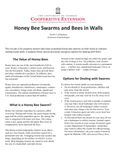 Honey Bee Swarms and Bees in Walls