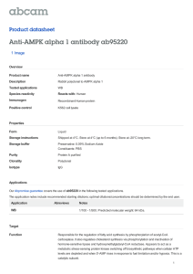 Anti-AMPK alpha 1 antibody ab95220 Product datasheet 1 Image