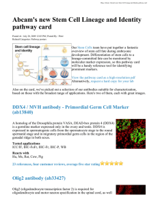 Abcam's new Stem Cell Lineage and Identity pathway card