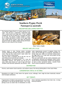 Southern Pygmy Perch Nannoperca australis DESCRIPTION AND CHARACTERISTICS