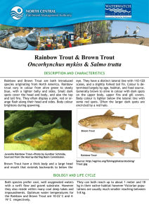 Rainbow Trout & Brown Trout Oncorhynchus mykiss DESCRIPTION AND CHARACTERISTICS