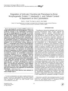 Regulation of Articular Chondrocyte Phenotype by Bone