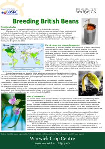 Breeding British Beans Nutritional value