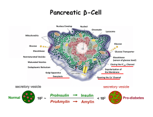 Pancreatic β-Cell