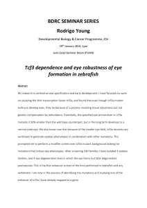 BDRC SEMINAR SERIES Rodrigo Young Tcf3 dependence and eye robustness of eye