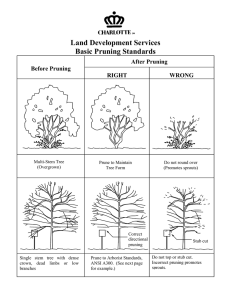 Land Development Services Basic Pruning Standards After Pruning
