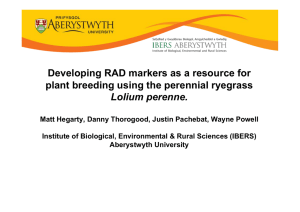 Developing RAD markers as a resource for Lolium perenne.
