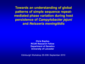 Towards an understanding of global patterns of simple sequence repeat-