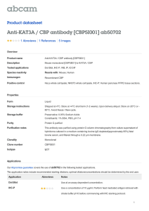 Anti-KAT3A / CBP antibody [CBP5I001] ab50702 Product datasheet 1 Abreviews 5 Images
