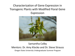 Characterization of Gene Expression in Transgenic Plants with Modified Floral Gene Expression