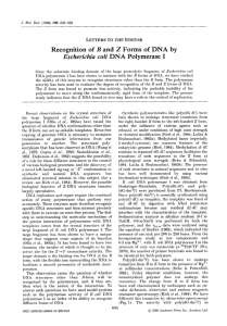 Recognition of  B  and  2  Forms ... Escherichia  coti  DNA  Polymerase  I LETTERS