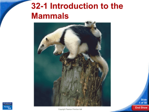 32-1 Introduction to the Mammals Slide 1 of 50