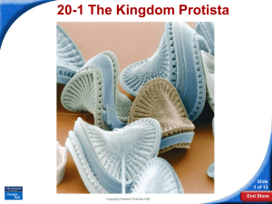20-1 The Kingdom Protista Slide 1 of 13 End Show
