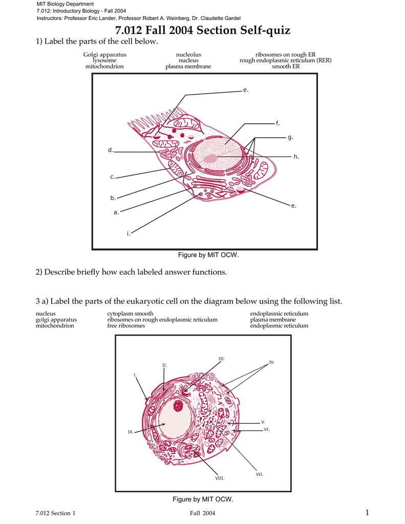 Labeled Eukaryotic Cell Diagram