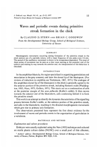 Waves and periodic events during primitive streak formation in the chick