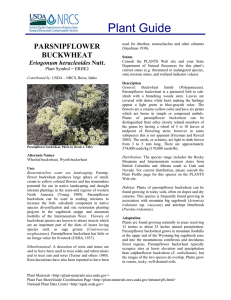 Plant Guide PARSNIPFLOWER