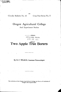 Two Apple Tree Borers Oregon Agricultural College t 17