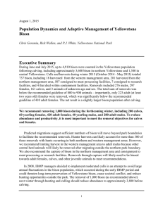 Population Dynamics and Adaptive Management of Yellowstone Bison  Executive Summary