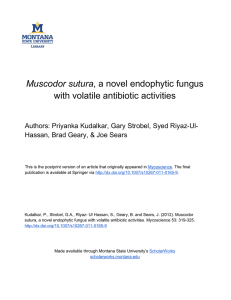 Muscodor sutura with volatile antibiotic activities Hassan, Brad Geary, & Joe Sears