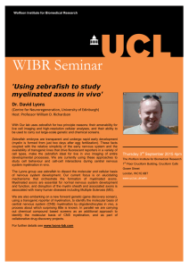 WIBR Seminar 'Using zebrafish to study myelinated axons in vivo'