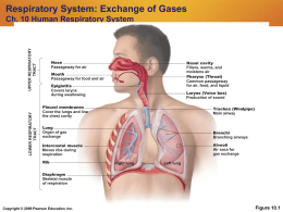 essays on respiratory system The respiratory system essay tissues 5 briefly describe which essential oils can benefit the respiratory system including the effects and most appropriate.