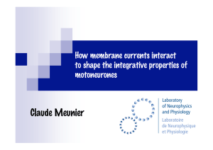 Claude Meunier How membrane currents interact to shape the integrative properties of motoneurones