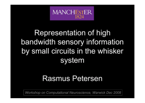 Representation of high bandwidth sensory information by small circuits in the whisker system